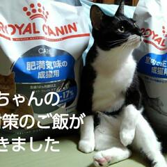 にゃんこ同好会/白黒猫/フォロー大歓迎/猫 僕ちゃんのダイエット対策と お嬢様達のご…