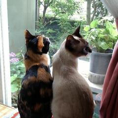お外見張り隊/三姉弟猫/雨季ウキフォト投稿キャンペーン/フォロー大歓迎/LIMIAペット同好会/にゃんこ同好会 白いにゃんこさんがお外にいたので3にゃん…(7枚目)