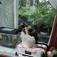 秋/ペット/猫 女子二人で鈴虫さん観察中