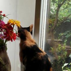 風景/畑/夏のお花/猫/姉妹/フォロー大歓迎/... 畑の乳母ユリ 1つしか咲いてなかった 今…(7枚目)