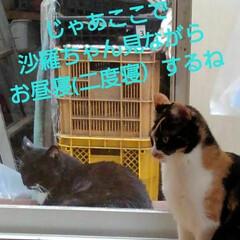 猫の気持ち/猫のいる柄が/にゃんこ日めくり おはようございます 5月11日 月曜日で…(7枚目)