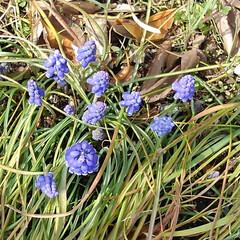 お出かけ/春 お出かけ先のお花
