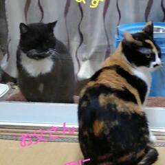 猫のいる暮らし/ねこ/にゃんこ同好会 朝の沙羅ちゃんとサムト君の会話 おしゃべ…(3枚目)