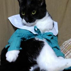 ハンドメイド/モデル/白黒猫/フォロー大歓迎/LIMIA手作りし隊/LIMIAペット同好会/... 紗夢 またもやモデルさん  瑠月が途中で…