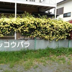 花のある生活/風景 うーちゃんと見てきたお花  公園に沿って…