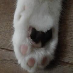 白黒猫/肉球/雨季ウキフォト投稿キャンペーン/フォロー大歓迎/LIMIAペット同好会/にゃんこ同好会/... すご~い親バカですが サムの右手に サム…