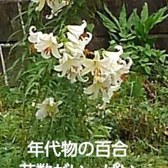 初夏の花/花のある生活 午後は雨の合間に主人は畑に👨 私はリミア…