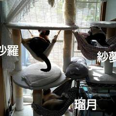 猫のいる生活/三姉弟猫/ハンモック 昨日のお仕事  使わない物を使ってハンモ…