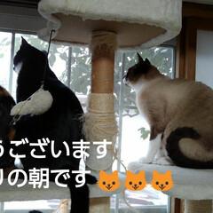 三姉弟猫/猫のいる生活/にゃんこ同好会/にゃんこ日めくり おはようございます🙀🙀🙀 雨降りの朝です…