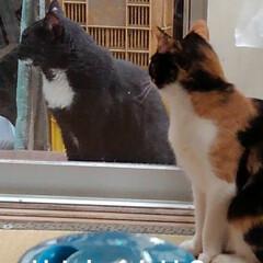 猫の気持ち/猫のいる柄が/にゃんこ日めくり おはようございます 5月11日 月曜日で…(4枚目)
