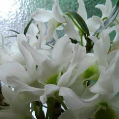 「去年頂いたたお花が 今年もいっぱい咲いて…」(4枚目)