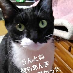 ねこ/猫のいる暮らし/にゃんこ同好会 昨日の夕食に 昼間に採った土筆を頂く前に…(10枚目)