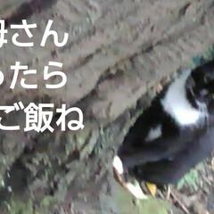 わんこ同好会/にゃんこ同好会 夕方の散歩の時 素敵なボディガードが一緒…(5枚目)