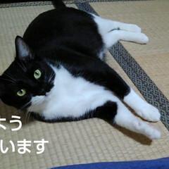 猫のいる生活/にゃんこ同好会/にゃんこ日めくり おはようございます 今日も雨です  雨が…