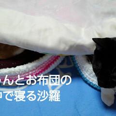 姉弟/にゃんこ同好会 お布団の横に 猫ベッドに入って寝たままの…(3枚目)