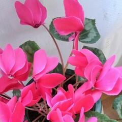 春の花/春のフォト投稿キャンペーン/風景/春の一枚 春の花 いっぱい咲いてます  3年前のシ…