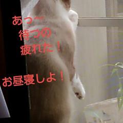 リミアペット同好会/猫/シャム/フォロー大歓迎 すれ違いに待っていた 可愛いカップルの待…(6枚目)