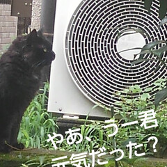猫のいる生活 昨日 夕方の散歩に行く前な事  黒井さん…(3枚目)