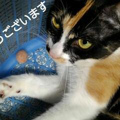 猫の気持ち/猫のいる生活/にゃんこ日めくり/にゃんこ同好会 おはようございます 今日もとても良い天気…