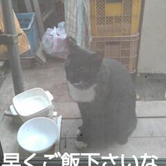 猫のいる暮らし/にゃんこ同好会/にゃんこ日めくり おはようございます 昨日よりましな涼しい…(4枚目)