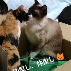 猫のいる生活/ねこ/にゃんこ同好会 毎度、 お馴染みの箱入り息子&娘  飽き…(4枚目)