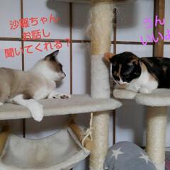 姉妹/猫/にゃんこ同好会/リミアペット同好会/フォロー大歓迎 夕飯後の瑠月と沙羅の女子トーク