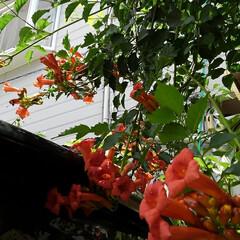 風景 うーくんのお気に入りだった花  お隣には…(4枚目)