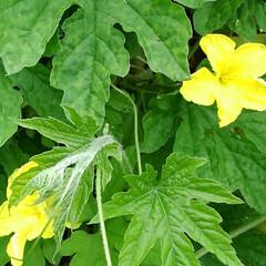 風景/花/畑/フォロー大歓迎/LIMIAおでかけ部/おでかけワンショット 畑の虫と花🌸  1枚目  グリーンの綺麗…(7枚目)