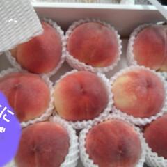 にゃんこ同好会/ねこ/ねこのいる生活 昨日、山梨のおじちゃんから 美味しい桃が…(3枚目)