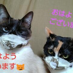 三姉弟猫/猫のいる生活/にゃんこ同好会/にゃんこ日めくり おはようございます 4月6日 月曜日です…