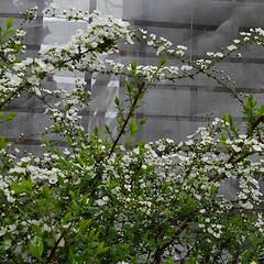 春 春の庭(8枚目)