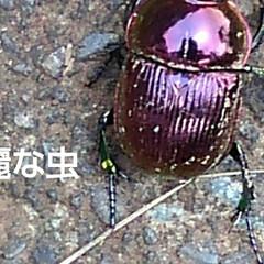 「綺麗な夏空と虫たち 」(6枚目)