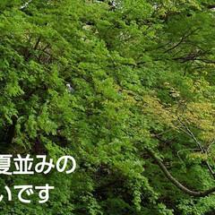 風景/花のある生活 お散歩してたらもう初夏並みの 景色になっ…(1枚目)