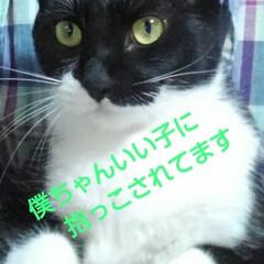白黒猫/フォロー大歓迎 座ると直ぐ膝小僧になる紗夢 来てくれるの…