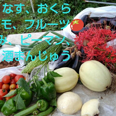 風景/畑/朱色/フォロー大歓迎 今日も収穫物です 10日ぶりなのでスゴイ…(2枚目)