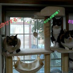 仲良し/猫/三姉弟/見張り隊/フォロー大歓迎 今朝は雨降りの日曜日  昨日の長いお留守…