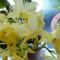 「去年頂いたたお花が 今年もいっぱい咲いて…」(2枚目)