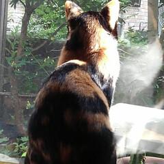 見張り隊/三毛猫/フォロー大歓迎/LIMIAペット同好会/にゃんこ同好会/はじめてフォト投稿 今日はサラが一人で見張り番 一階の居間か…