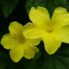 風景/花/畑/フォロー大歓迎/LIMIAおでかけ部/おでかけワンショット 畑の虫と花🌸  1枚目  グリーンの綺麗…(6枚目)