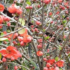 春の花 お出かけ先の春の花(2枚目)