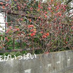春の花 お出かけ先の春の花