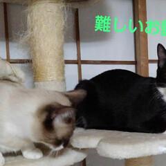 猫/姉弟/フォロー大歓迎 昨日の夜の事 瑠月と紗夢が 仲良く並んで…(2枚目)
