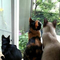 お外見張り隊/三姉弟猫/雨季ウキフォト投稿キャンペーン/フォロー大歓迎/LIMIAペット同好会/にゃんこ同好会 白いにゃんこさんがお外にいたので3にゃん…(2枚目)