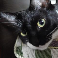 白黒猫/見張り隊/フォロー大歓迎/LIMIAペット同好会/にゃんこ同好会/夏のお気に入り おはようございます 今朝の見張り隊報告 …