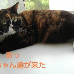 猫のいる生活 アルト達がくつろいでる頃 我が家の3にゃ…(3枚目)