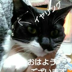 白黒猫/にゃんこ同好会/にゃんこ日めくり おはようございます🐱 いい天気の火曜日の…