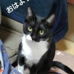 白黒猫/にゃんこ日めくり/にゃんこ同好会 おはようございます🐱 3月6日 金曜日で…