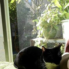 お気に入り/白黒猫/ここが好き お日さまいっぱいのお気に入りの場所で う…