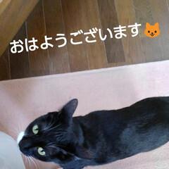 白黒猫/にゃんこ同好会/にゃんこ日めくり おはようございます🐱 今朝は雨が降ってい…