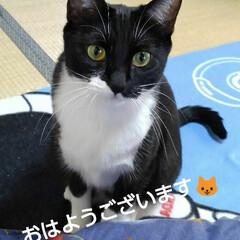 白黒猫/にゃんこ同好会/にゃんこ日めくり おはようございます🐱 3月12日 木曜日…